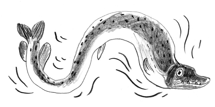 Black and white illustration of a magic pike fish